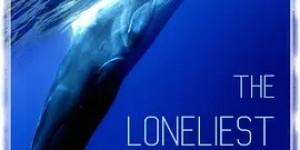 最孤独的鲸:寻找52